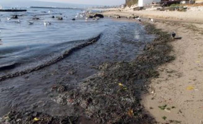 Море мръсотия
