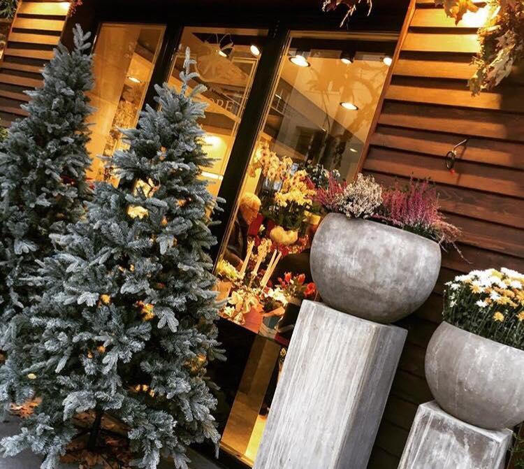 Коледа елха празници