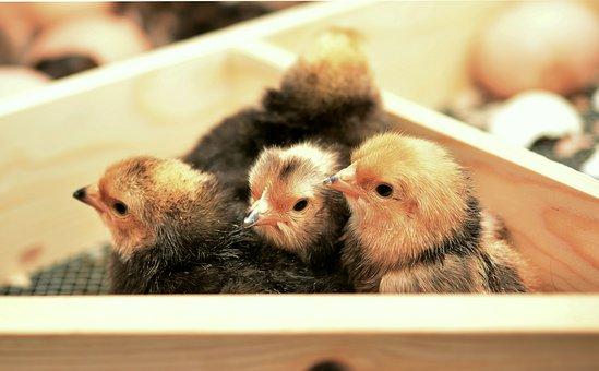Констатирано еново огнище на птичи грипвъв ферма за патици в