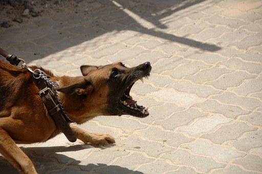 dog-900215__340