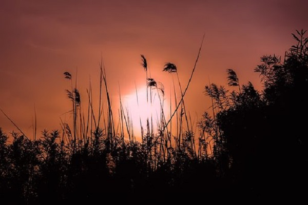 sunset-3326109__340.jpg