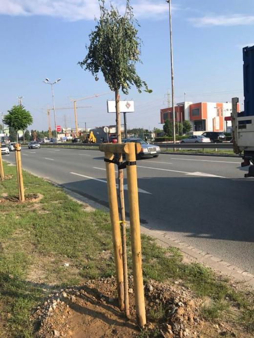 29 от общо 240-те фиданки на Околовръстния път на София