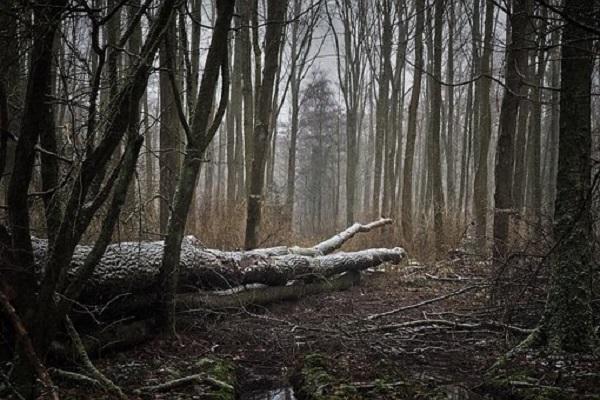 forest-3143157__340.jpg